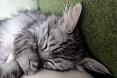 Kitten in en om huis (Marjan van de Pol) Tags: dordrecht grace kitten nederland sony sonyrx100m3 fave favorite faved