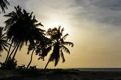 biker dream (bilderkombinat berlin) Tags: ocean sea beach backlight sunrise contraluz palms mar meer playa republicadominicana lasterrenas caribe quisqueya 2016