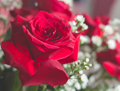 IMG_4135 (Josy'ta) Tags: rose rosas rosascolombianas flowers flores flor diadosnamorados love