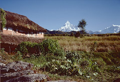 A21-24scan.red (Niels R.) Tags: nepal pokhara machapuchare