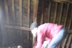 IMG_3097 (De Tuinen van Servaas en Dorothe) Tags: duiven mest dakgoot stof gebinte