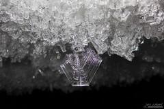 _LL-0223 (lars.lehnert) Tags: antarktis eiskristalle lnderundregionen neumayerstationii