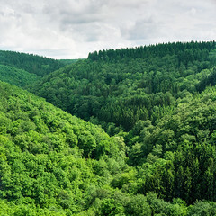 Above the trees (Genghis 72) Tags: film analog vintage germany deutschland hasselblad valley medium format grn expired rhine portra allemagne rheinland pfalz rhin mittelformat oberwesel schnburg bame