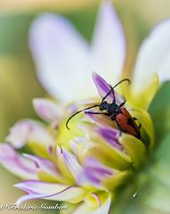 Ouf... (frederic.gombert) Tags: flowers light sun sunlight flower macro yellow garden insect spring nikon autofocus greatphotographers d810 macrodreams