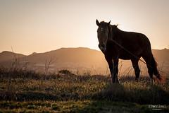 Ami du couch (tecgroove) Tags: light sunset horse saint de cheval soleil lumire pierre couch spm