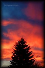 Zachd soca (Renata_Lipiska) Tags: sunset sky cloud tree weather clouds outdoor dusk picture depthoffield serene drzewo chmury niebo pogoda chmura zachdsoca zmierzch obrazek photoborder