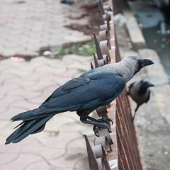 Original pic here : http://ift.tt/28SZ51c (topcao) Tags: instagram  india journey  smallorange mumbai omg crows everywhere hope they dont bite travel traveling igindia vacation visiting instatravel instago instagood trip holiday photooftheday fun travelling tourism tourist instapassport instatraveling mytravelgram travelgram travelingram igtravel delhi rajasthan love beautiful happy amazing summer