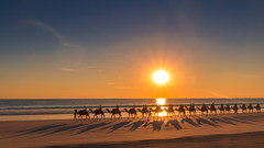 Camel train (jan_clewett) Tags: cameltrain broome kimberleys cablebeach westernaustralia camels holiday sunset seascape