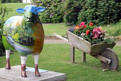 Wanda (Cumberland Patriot) Tags: wanda sheep painted go cumbria trust calvert ewe cumbrian herdwick goherdwick