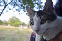 G A T O / C A T (Tato Avila) Tags: animal cat colombia bigotes colores gato vida campo felinos cielos clido