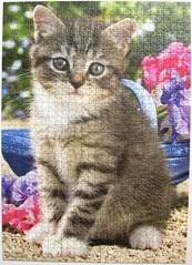 Ktzchen im Garten (Greg Cuddiford) (Leonisha) Tags: flowers cat kitten chat blumen puzzle katze jigsawpuzzle ktzchen ravensburger