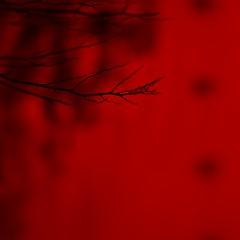 . . . red Sq (orangecapri) Tags: orangecapri red square squareformat abstract blur bokeh minimalist hss sliderssunday quadratum 500x500 canon macro ef100mmf28lismacro