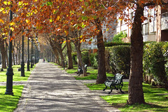 Otoo en Las Condes / Chile (Leon Calquin) Tags: chile street travel las autumn santiago calle flickr photos viajes leon fotos otoo catalog diseo videos condes catalogo calquin leoncalquin visviri quincal