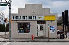 Little Bee Mart (Bracus Triticum) Tags: ontario canada bug spring little bee april sutton mart 四月 4月 カナダ uzuki 2013 オンタリオ州 卯月 shigatsu unohanamonth サットン 平成25年