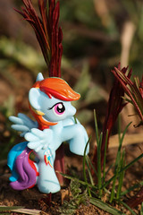 Rainbow Dash ~ 127/365 (Hamsteh) Tags: rainbow g4 pegasus dash fim figure bb mlp mylittlepony rainbowdash blindbag friendshipismagic