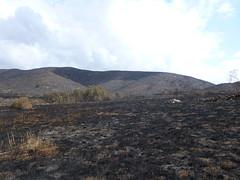 La Jolla grassland (Santa Monica Mountains National Recreation Area) Tags: fire lajolla springsfire