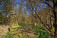 Standing Stone (Saturated Imagery) Tags: trees canal yorkshire dslr huddersfield standingstone colnevalley slaithwaite huddersfieldnarrowcanal sigma1020mmf35 canoneos60d photoshopelements9