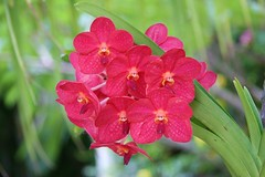 Tropical Flower Names Tropic 7 Tags Flowers Red