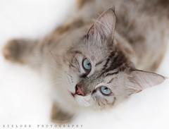 My 3etow! (ZiZLoSs) Tags: cats animal animals cat focus photographer photographers kuwait abdulaziz zizloss canon7d almanie uploaded:by=flickrmobile flickriosapp:filter=nofilter