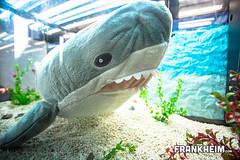 161 Haialarm (Frank Heim) Tags: aquarium licht shark wasser symbol pflanzen hai spielzeug glas plastik stofftier kunstlicht stoff symbolisch ironshark