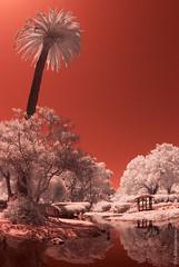Landscape in Red (thedot_ru) Tags: california ca red sky santabarbara landscape ir wideangle foliage palmtrees infrared gel refelction 2013 fujis3pro fullspectrumcamera