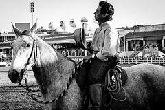 (Digenes) Tags: horses horse white black caballo pb cavalo f mangalarga marchador abccmm
