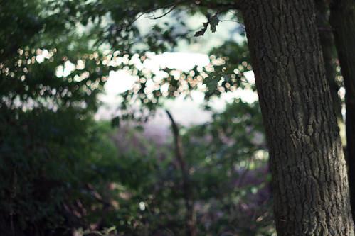 Dunkler Wald..