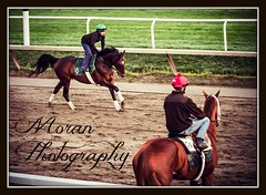 Mott Trainee (EASY GOER) Tags: horses horse ny sports racetrack canon track state action tracks racing course event 7d athletes races sporting thoroughbred equine thoroughbreds equines sportofkings