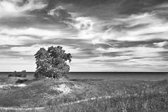 Dunes, Lake, Sky (Madison Guy) Tags: blackandwhite bw wisconsin landscape dunes shoreline lakemichigan sheboygan sanddunes thirdcoast kohlerandraestatepark