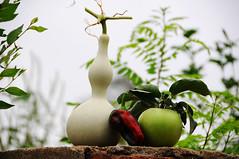 Fresh picks (Mel@photo break) Tags: china food plant apple fruit pepper bokeh farm vegetable fresh mel eat melinda pick shenyang liaoning   bottlegourd chanmelmel melindachan