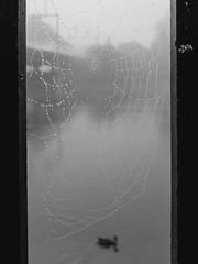 Misty Morning (Andris Linz | Photography) Tags: morning mist water fog river schweiz switzerland spider duck wasser nebel web fluss ente morgen solothurn aare spinnennetz