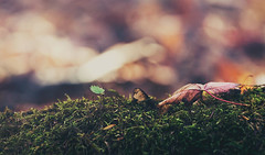 In woods (Gabriela Tulian) Tags: autumn detail macro green nature colors grass leaves forest bokeh vision:sunset=096