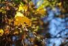 Autumn 2013 (grygolas) Tags: nikkor50mm14ai