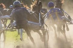 "Harddraverijen Joure: ""Dust in the Sun"". (parnas) Tags: horses nederland races friesland paarden joure renbaan harddraverijen"