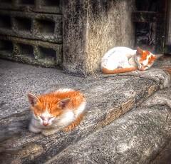 kittens (mikeeliza) Tags: street orange white kite rock cat fur feline chat pavement sleep may kittens gato purr gata meow block cath gatto alleycat hollow kats kass katt kato miu felis kissa ket pusa gati meo cattus maow chatz catua ikati mikeeliza