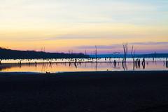 Early Morning Ducks (Kansas Poetry (Patrick)) Tags: lake kansas canadiangeese lawrencekansas sunr clintonlake patrickemerson patricknancydophotography