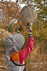 Giant Wasp Hive in Late Fall (3 of 5) by Vista Lake at Duke Farms, Hillsborough, NJ (takegoro) Tags: autumn trees lake fall nature colors wasp nest foliage hive sanctuary naturepreserve dukefarms nj hillsborough