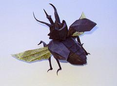 Flying Atlas Beetle by Nguyen Hung Cuong, folded by me (Shikigami no Mai) Tags: flying origami beetle atlas hung nguyen cuong nguyenhungcuong flyingatlasbeetle