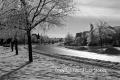 Icy Day Following the Storm (Lisa-S) Tags: trees blackandwhite bw ontario canada storm ice lisas damaged tragic coated brampton 4214 eagleridgedrive copyright2013lisastokes
