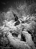In the Bush (glidergoth) Tags: ir mono sydney australia infrared palmbeach barranjoey