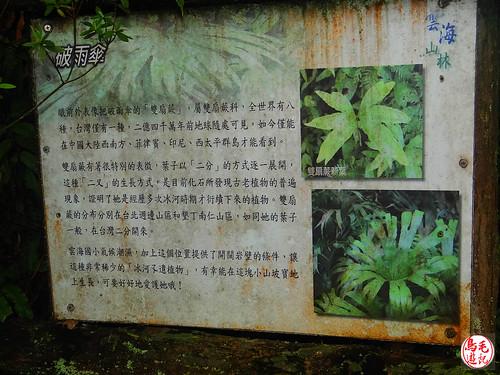 雲海山步道 (16).jpg