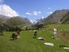 tien shan mountains kyrgystan (lercherl) Tags: kyrgyzstan kirgisien قيرغيزستان киргизия 키르기스스탄