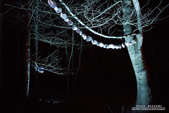 Seashells (DMeadows) Tags: lighting wood trees shells house up gardens by seashells forest woodland walking lights scotland woods colours estate fife path walk illuminated trail sound hanging snowdrops lit noise visual audio soundtrack chimes hung starlight cambo aural kingsbarns davidmeadows dmeadows davidameadows dameadows