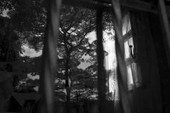 Entre Mundos (Leonardo Amaro Rodrigues ) Tags: monocromo pb entre mundos silncio betweenworlds entremundos aluzvemdedentro