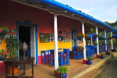 Colombia, La NIEBLA, Santander (jlfaurie) Tags: clara paisajes flores 2004 bernard fleurs restaurant colombia ines restaurante bleu santander mechas azules lucila lpm andesmountains colombie jlf faivre cordillèresdesandes laniebla jlfaurie pinillamarquez jlfr mpmdf paisajesandiens paisajedelacordillera