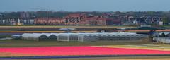 20140418-DSC_7233 (nikontino) Tags: flowers people dutch landscape tulip fields bulbs tulipa tulipe flowerarea