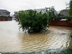 P1080471 (Stefan Teodosić) Tags: nature water rain flood floods catastrophy poplava poplave destaster