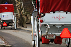 IMG_0707R (Peektours) Tags: horse newyork cheval centralpark cab chevaux calche