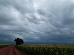 (IgorCamacho) Tags: road brazil cloud storm nature paran weather brasil clouds rural corn natureza line shelf southern estrada crop nubes tormenta nuvens agriculture sul severe milho tempestade agricultura plantao