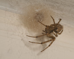 """Spider and Nest • <a style=""""font-size:0.8em;"""" href=""""http://www.flickr.com/photos/57024565@N00/14071334761/"""" target=""""_blank"""">View on Flickr</a>"""